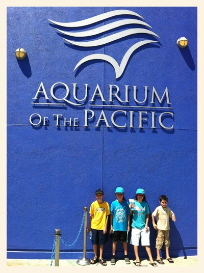 photograph regarding Aquarium of the Pacific Coupons Printable identified as Pleasurable at the Aquarium of the Pacific - Popsicle Weblog