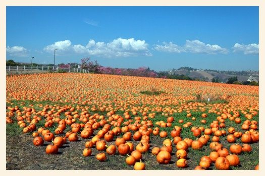 You Re Invited On A Field Trip To The Cal Poly Pomona Pumpkin Patch