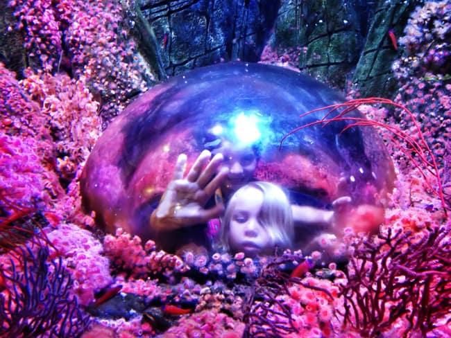 sea-life-aquarium-coral