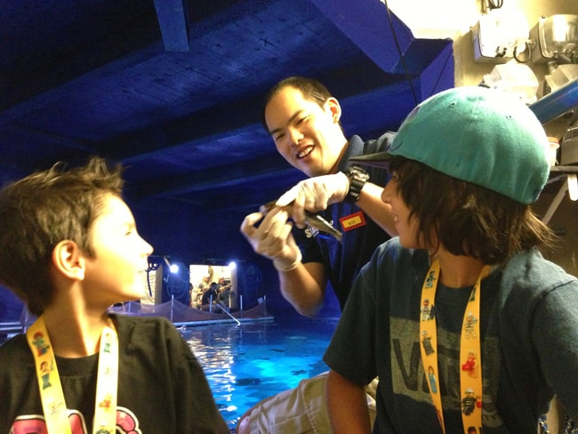 sea-life-aquarium-shark-feeding