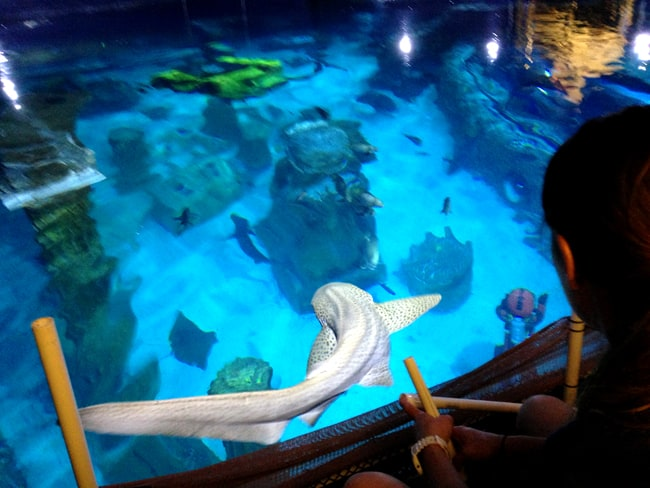 shark week at sea aquarium get a free ticket popsicle