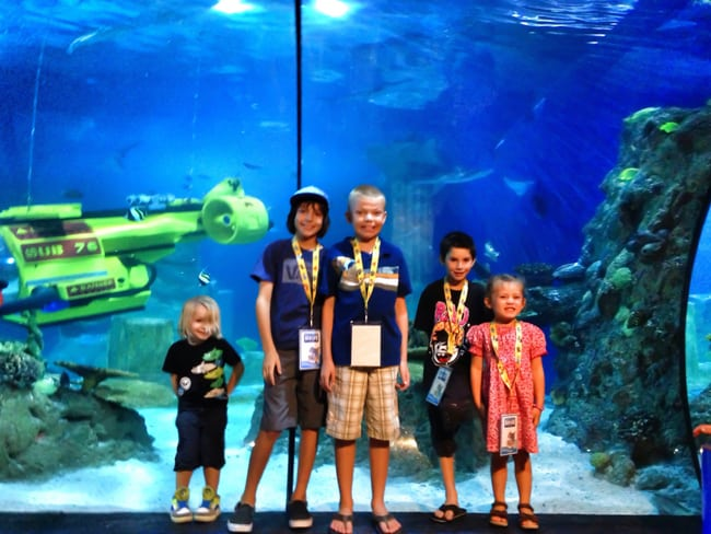 sea-life-aquarium-tank