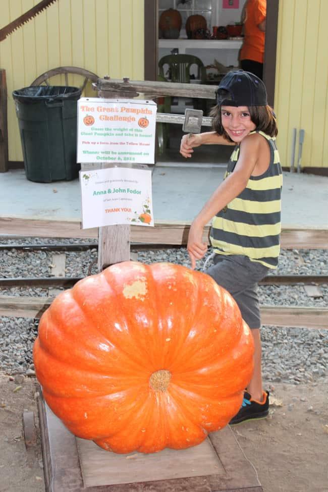 irvine-park-pumpkin-patch-contest