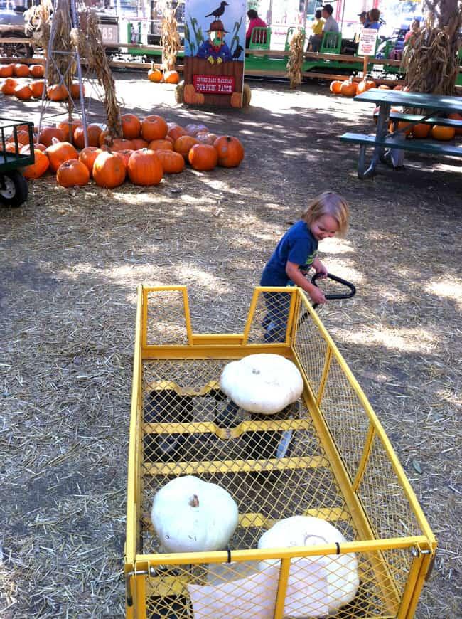 socal-pumpkin-patch