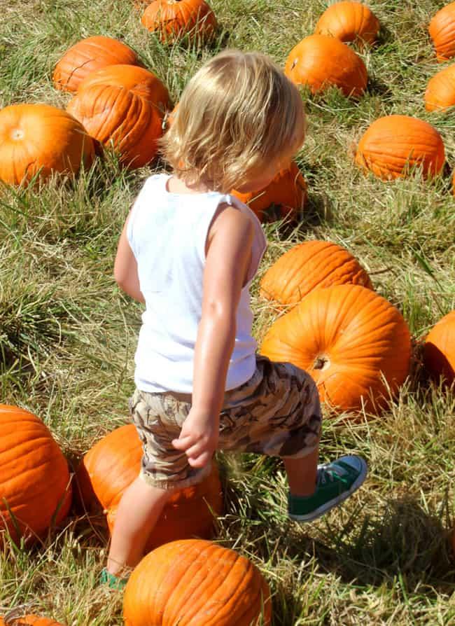 largest-socal-pumpkin-patch