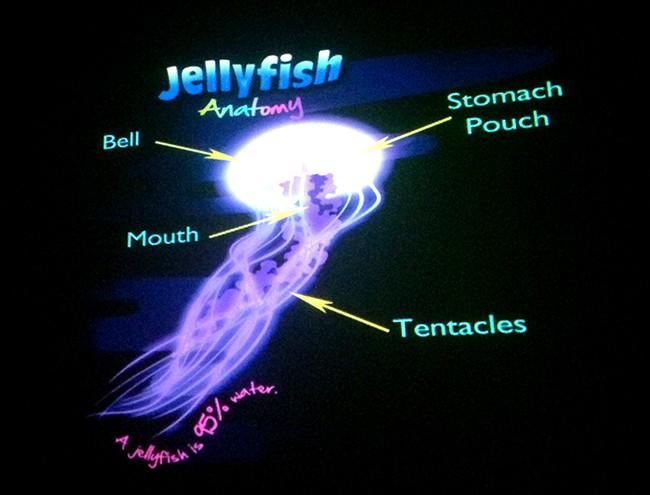 carlsbad-jellyfish-exhibit