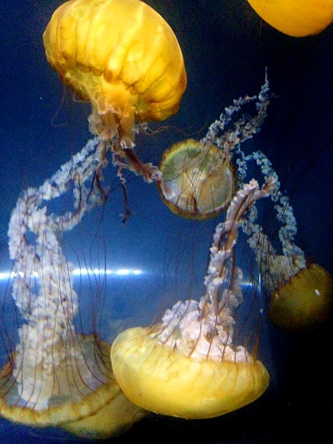 legoland-sealife-jellyfish