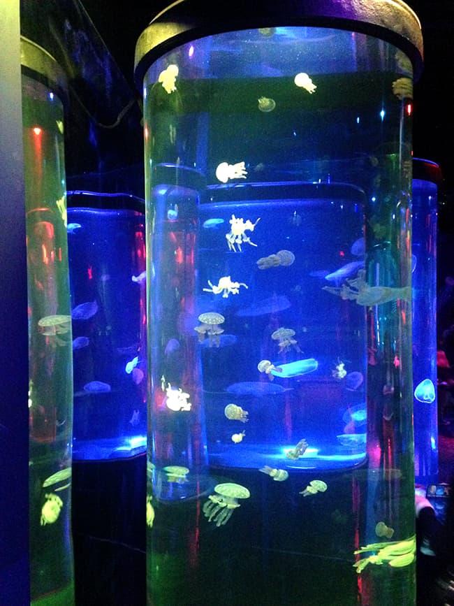 sealife-jellyfish-exhibit