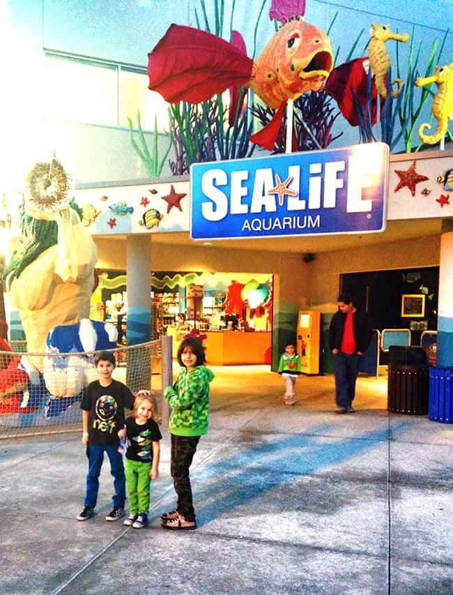 sealife-legoland-california-aquarium