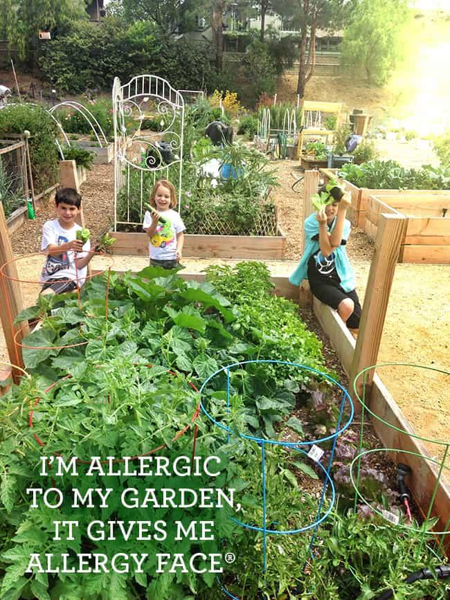 allergy-season-tips2