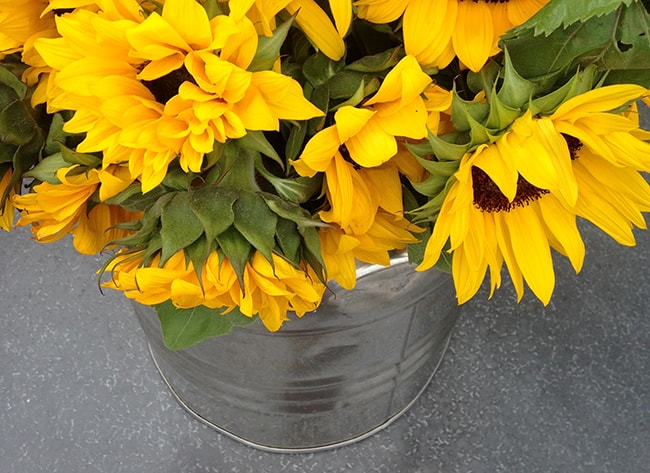sunflowers-mendocino-farms