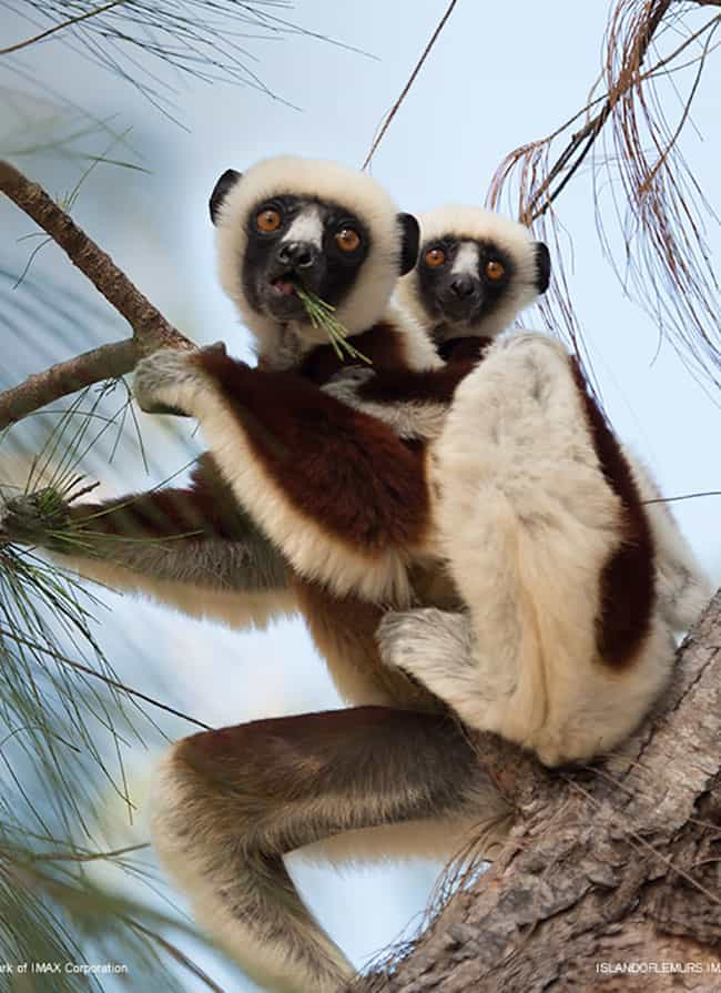 island-of-lemurs-movie