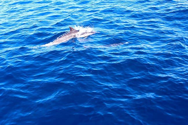 dana-point-california-dolphins