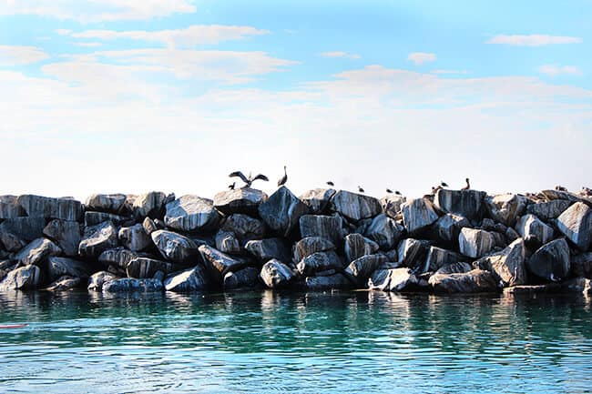 dana-point-seagulls