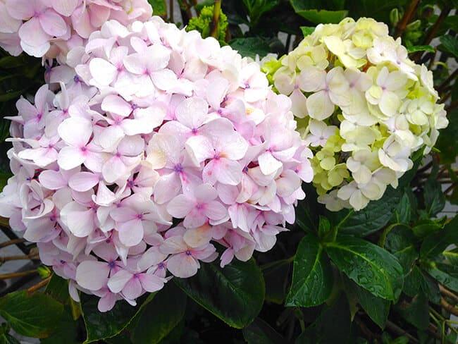 Carmel Hofsas House Flowers