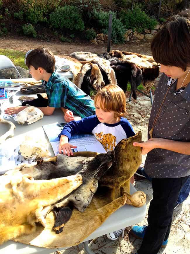 Carmel Point Lobos Animals