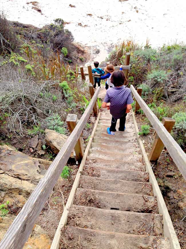 Point-Lobos-Gibson-Beach-Bird-Island