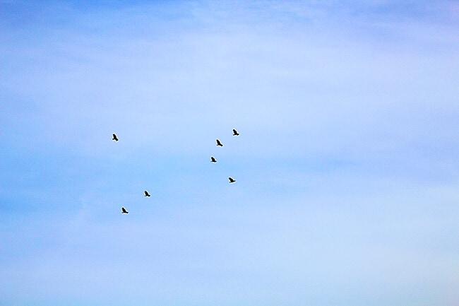 Anaheim Hills California Hawks