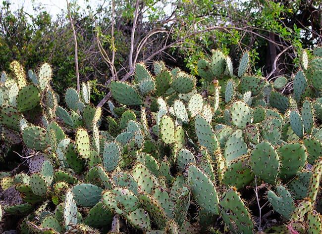 Anaheim Hills California Hiking Trails Cactus