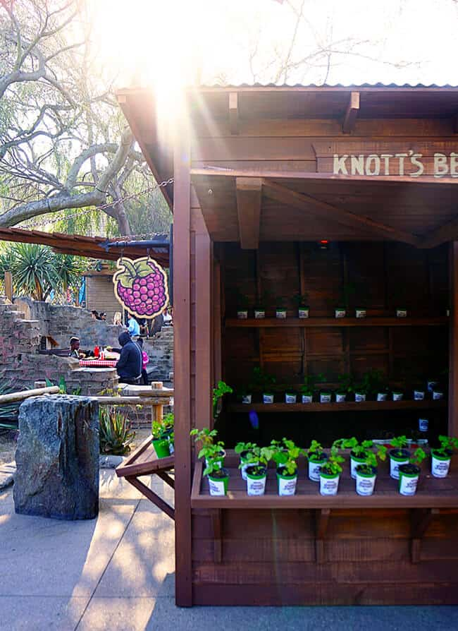 Knott's Berry Bloom Festival