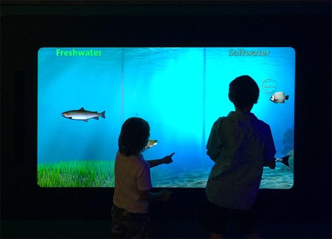 The Discovery Cube New Aqua Exhibit