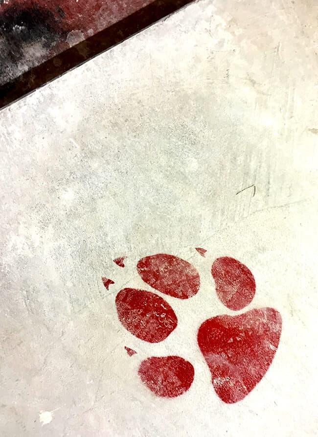 Great Wolf Lodge Bear Print