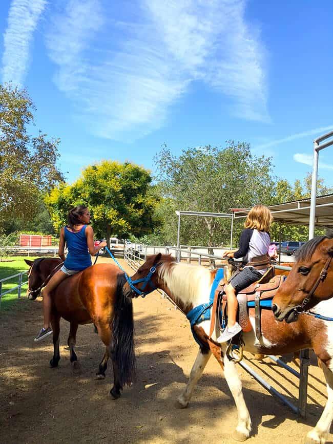 OC Park Horse Riding