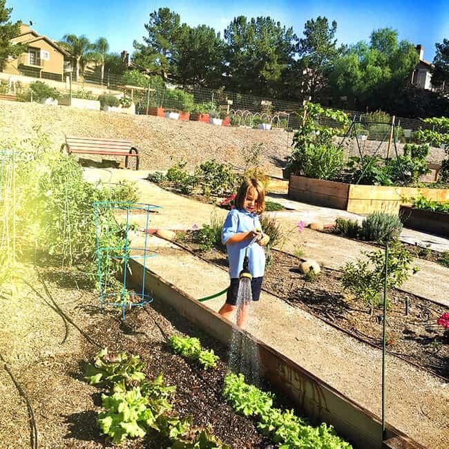 Popsicle Blog Garden