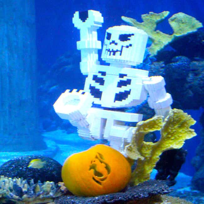 Sealife Halloween Brick or treat