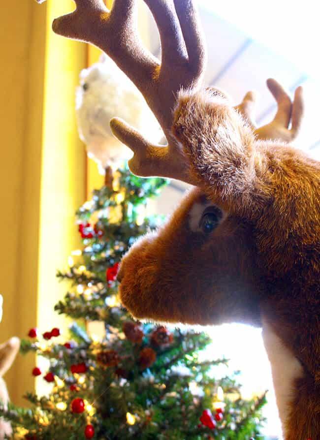 Reindeer at Catal Restaurant