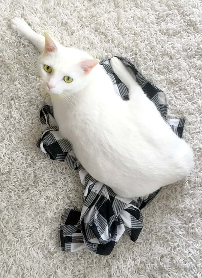 Beautiful White Cat on a White Rug