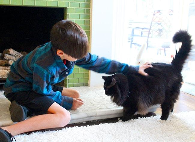 Cute Boy Petting a Cute Cate