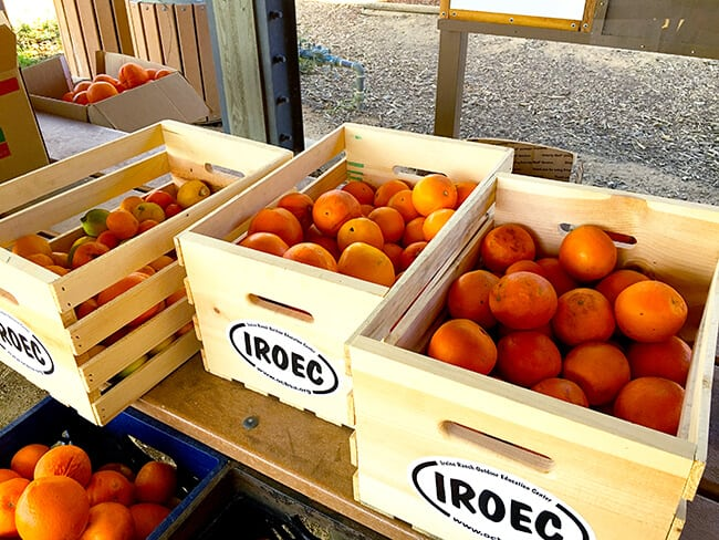Orange Crates at IROEC