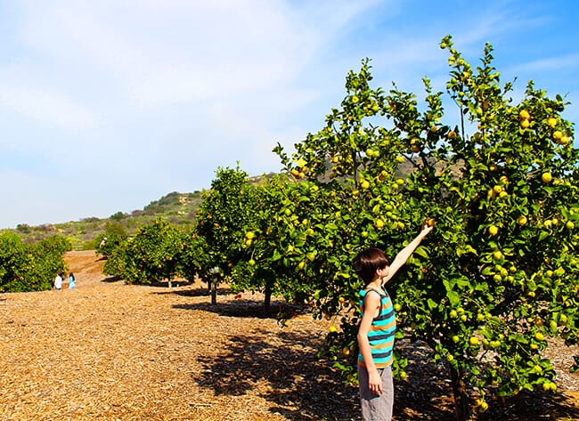 Picking Lemons in the OC