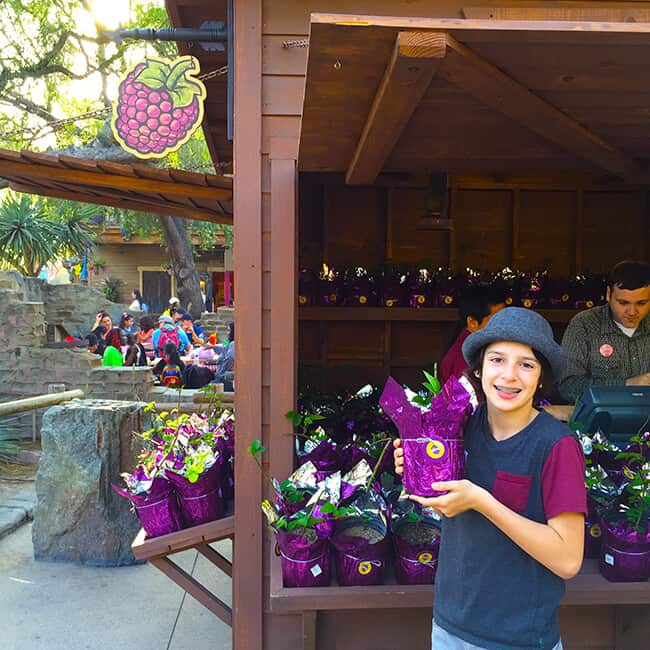 Buy Your Own Boysenberry Plant at Knott's