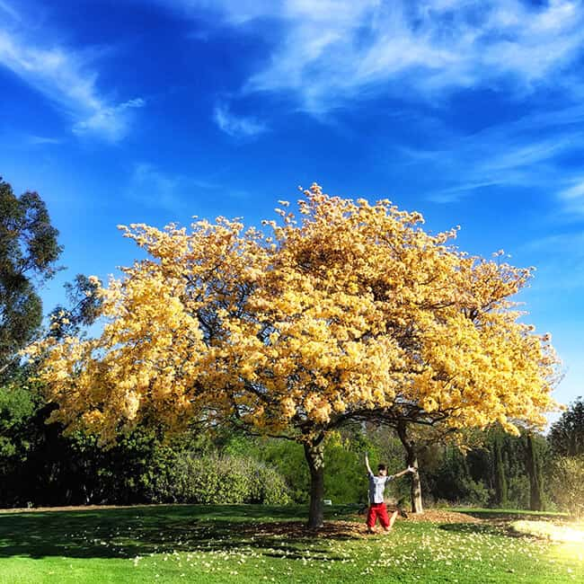 Palos Verdes Arboredum