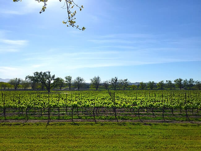 Bridlewood Estates Winery View