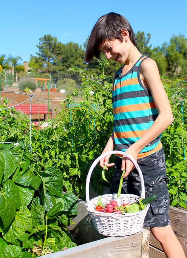 Popsicleblog Picking Vegetables in the Garden