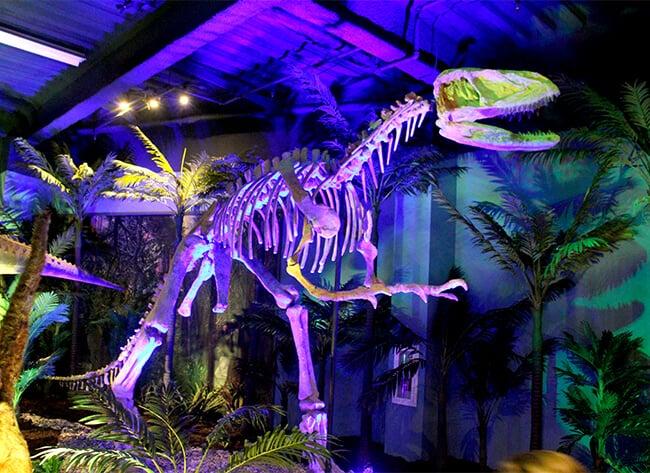 Dinosaur Bones at Discovery Cube