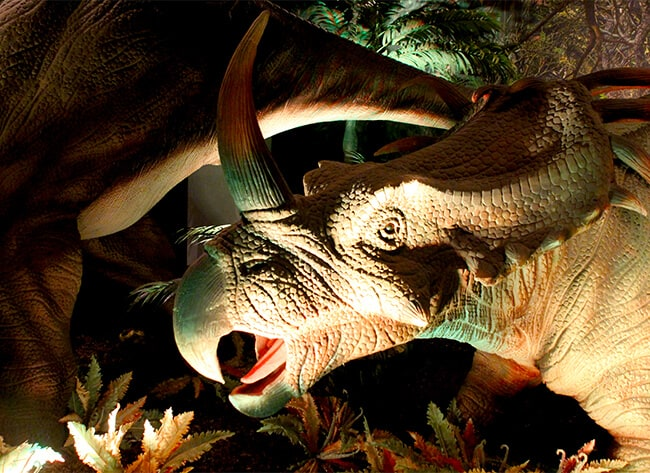 Triceratops at Discovery Cube