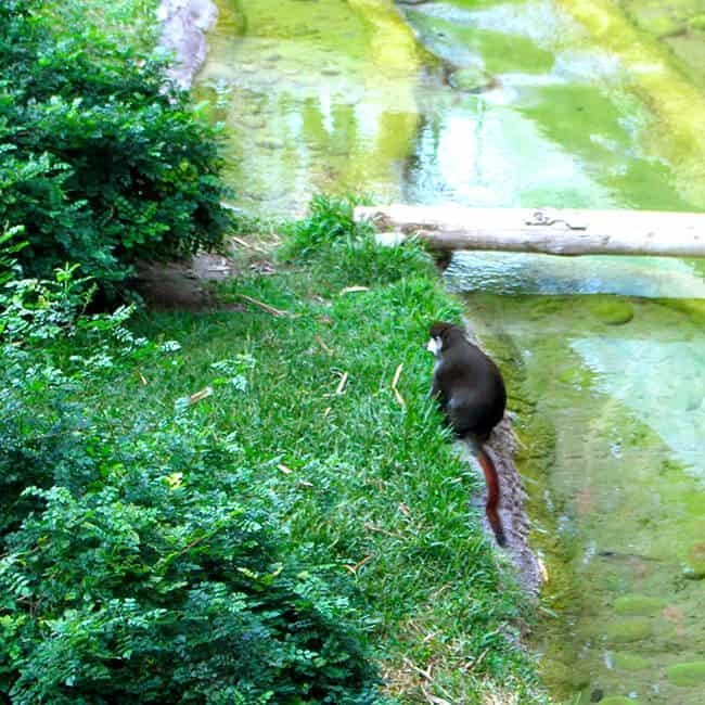 monkey_san_diego_zoo