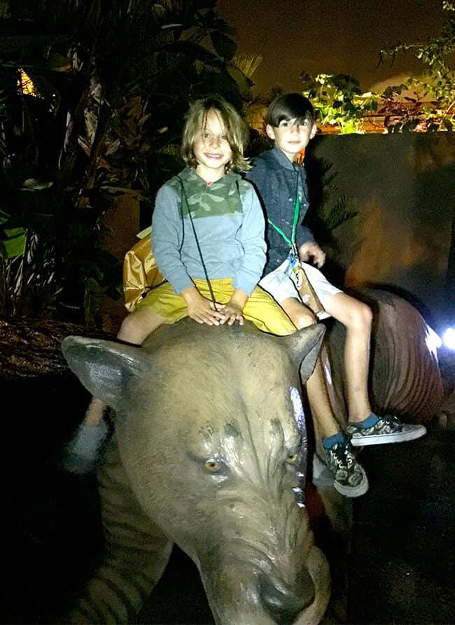 night_time_fun_at_the_zoo