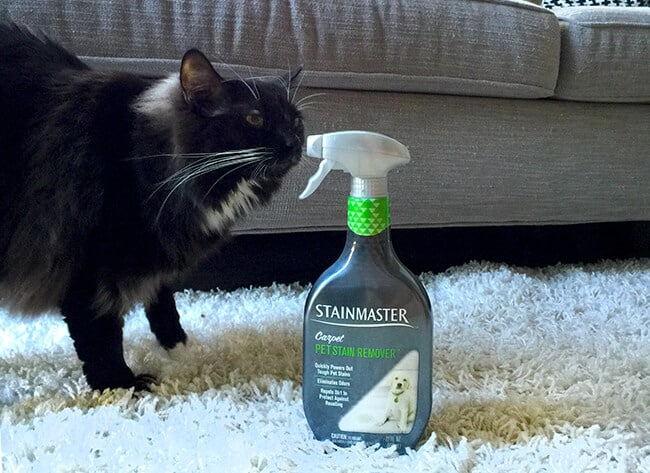 pet_stain_remover