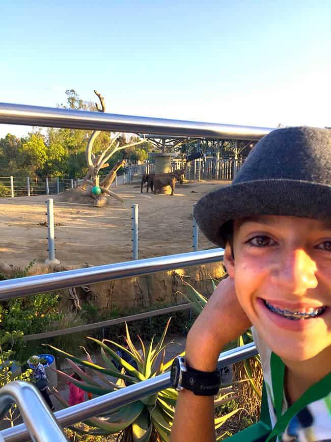 san_diego_wild_animal_park_tours