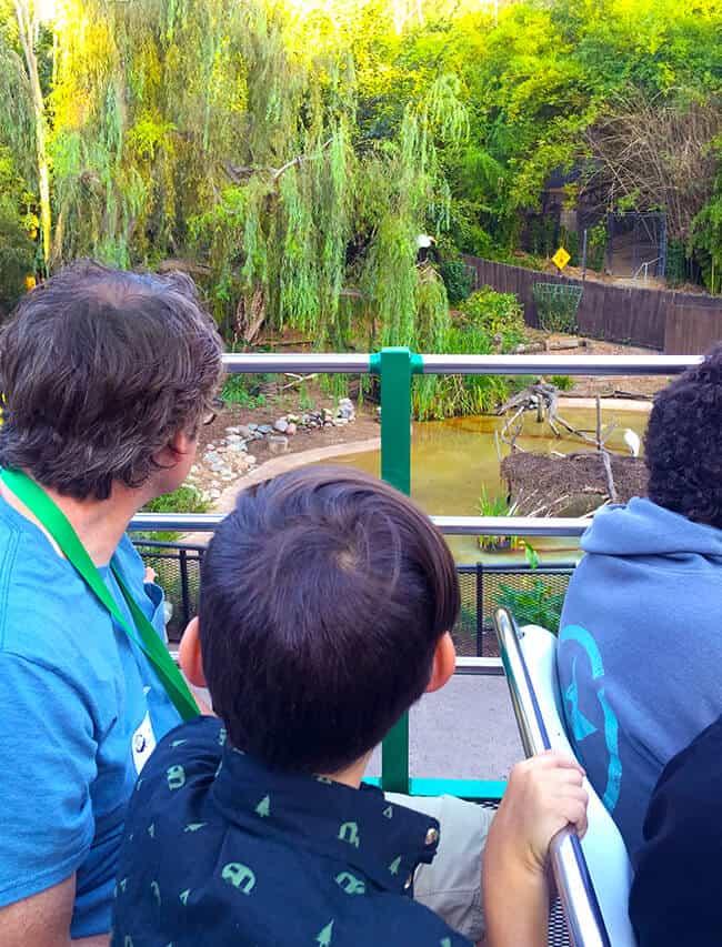 san_diego_zoo_tours