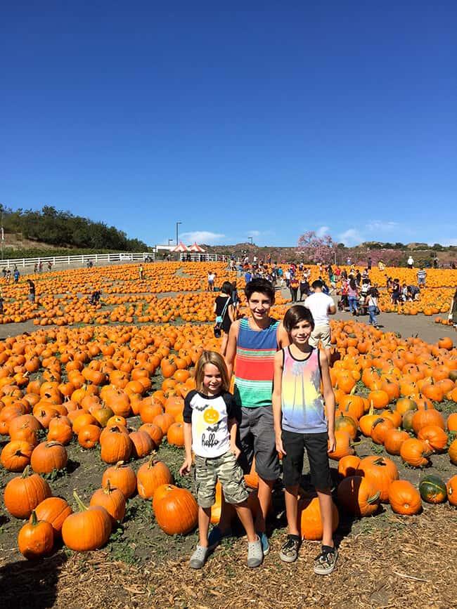 cal-poly-pomona-pumpkin-festival-in-october