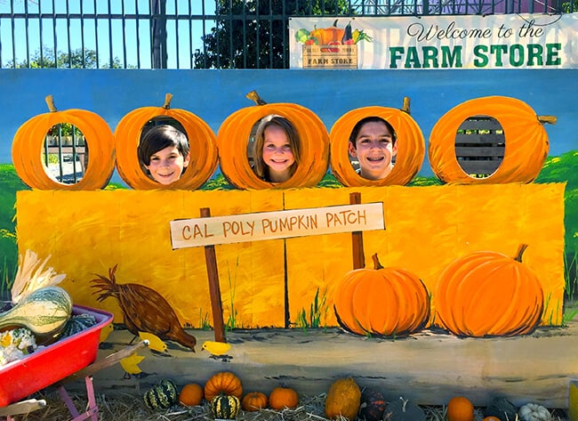 cal-poly-pomona-pumpkin-patch-photo-backdrop