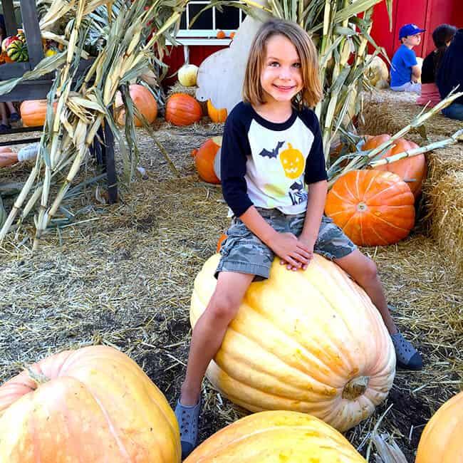 giant-pumpkins-at-the-pomona-pumpkin-patch