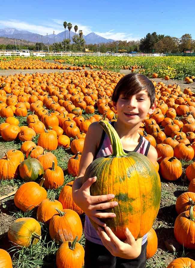 Family Fun at the Cal Poly Pomona Pumpkin Patch - Popsicle Blog