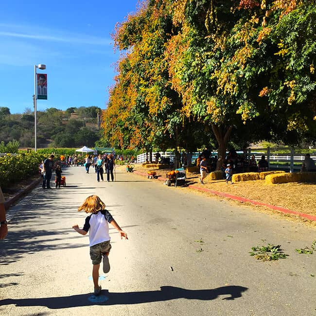 running-to-the-cal-poly-pomona-corn-maze
